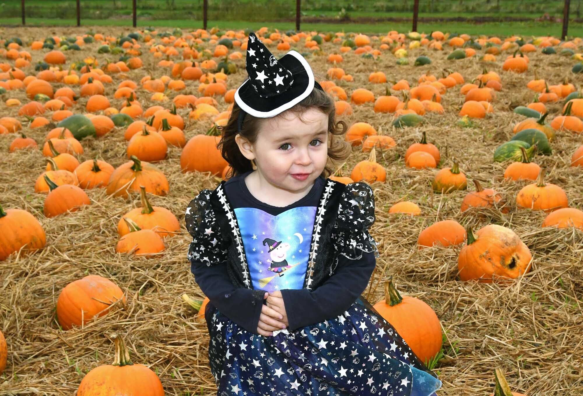 Two years old Katelyn Burns at the Pumkin Patch on the family farm, Joe's Farm, Killeagh, Co. Cork, where pumpkin picking begins this Saturday, October 9th, for Halloween.